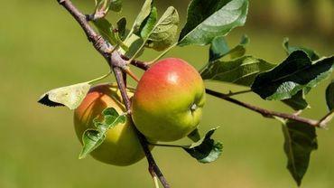 Les producteurs de fruits inquiets pour leurs récoltes avec le gel de cette semaine. Les arbres déjà en fleurs pourraient souffrir méchamment du froid.