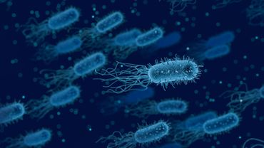 Les bactéries ont développé des stratégies afin de se défendre face aux antibiotiques.