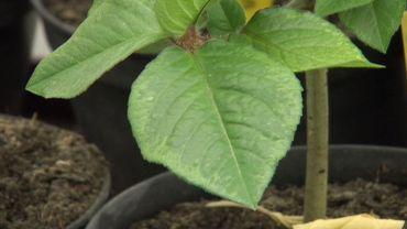 Université de Liège: découverte de nouvelles plantes