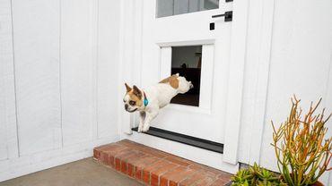 Le myQ Pet Portal permet à un chien de sortir dès qu'il en éprouve le besoin, où que soit son maitre.