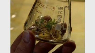 Les plantes ont germé après 30 000 ans dans la glace