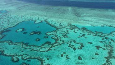 Des scientifiques ont réussi à élever du corail de cette région et à le transplanter dans une autre zone, un projet qui leur donne l'espoir de restaurer les écosystèmes endommagés