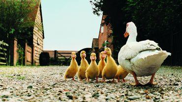 Chauve-souris, pangolin, volailles... Ces animaux qui nous transmettent des virus.
