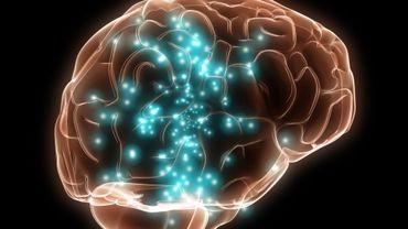 Le cerveau reste un mystère pour le public