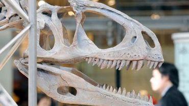 "Un squelette de dinosaure ""Cryolophosaurus ellioti"" exposé à Tokyo"