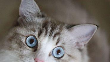 Les chats domestiquesdoivent être identifiéset enregistrés à partir du 1er novembre
