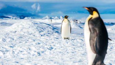 La colonie de manchots empereurs de Snow Hill en Antarctique