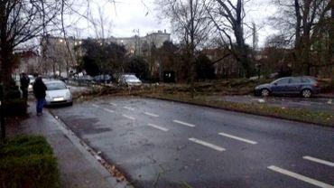 72 interventions pour des arbres tombés sur la chaussée. Ici à proximité du parc Marie-José à Molenbeek-Saint-Jean