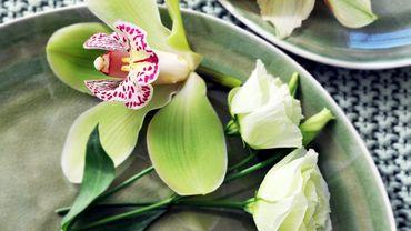 Plantes D Intérieur À Fleurs plante d'intérieur du mois : les fleurs pour les fêtes de fin d'année