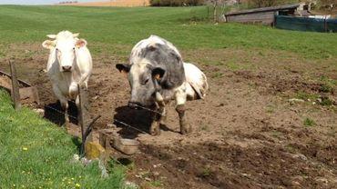 Un agriculteur est obligé de passer par l'intercommunale des eaux alors qu'il pourrait creuser un puits pour abruver son bétail gratuitement