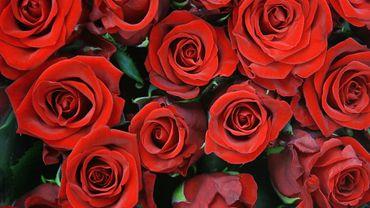 Saint Valentin, fête de l'amour... et des fleuristes