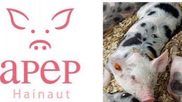 Neuf pays suspendent leurs importations de porc belge: Guy Duquenne, secrétaire de l'association provinciale des éleveurs de porcs du Hainaut réagit