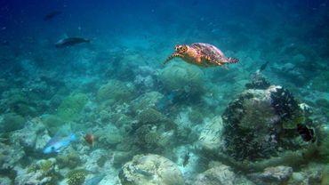 Fonds marins de l'Archipel des Chagos, dans l'océan Indien