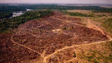 Déforestation, urbanisation: comment l'humain offre de nouvelles opportunités aux virus
