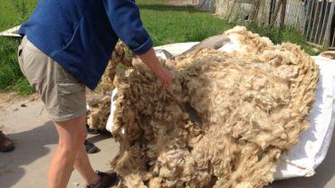 Des dizaines de sacs remplis de centaines de kg de laine