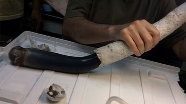 Des scientifiques découvrent... un ver géant! (PHOTO)