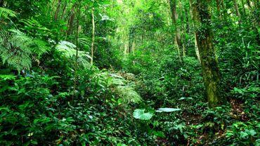 Au cœur de l'Amazonie, vivre dans la plus grande jungle du monde