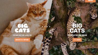 Grâce au site bigcats.be, le WWF espère sensibiliser les propriétaires de chats à l'insécurité du jagaur