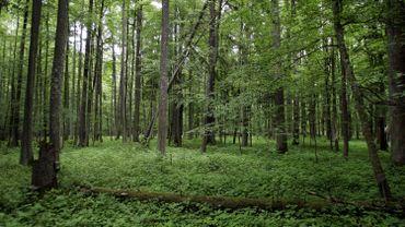 La forêt de Bialowieza contient une incroyable biodiversité