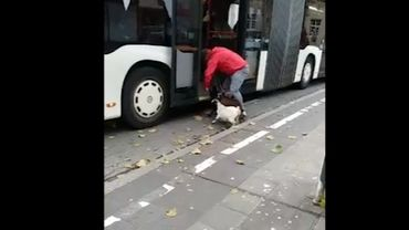 A Luxembourg, les chèvres aussi prennent le bus