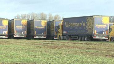 Depuis lundi, près de 300 semi-remorques bleus et jaunes attendent dans une prairie de la commune limbourgeoise d'Opglabbeek.