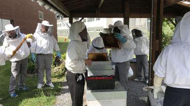 Des détenus de la prison de Marche participent à la sauvegarde de la biodiversité.