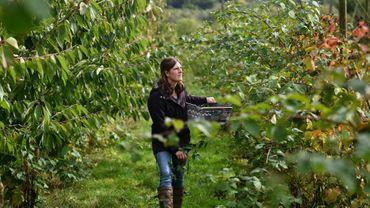 L'agricultrice Ellie Woodcock, le 9 octobre 2019 dans les vergers de sa ferme de Brambletye, à East Grinstead, en Angleterre