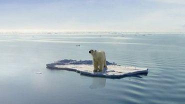Ours polaire, en voie de disparition ?