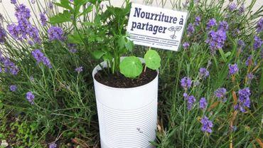 Le projet liégeois des Incroyables Comestibles reçoit le prix du Fonds Delhaize Group