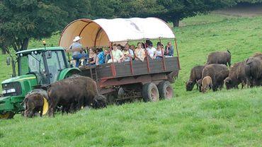 La visite du ranch en chariot parmi le troupeau de bisons