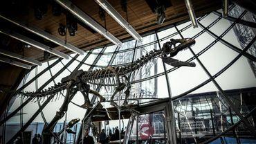 Un squelette d'un théropode, un dinosaure carnivore exposé au premier étage de la Tour Eiffel, à Paris le 2 juin 2018