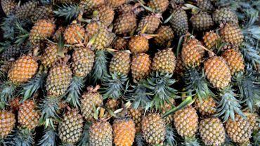 Les ananas venaient du Costa Rica