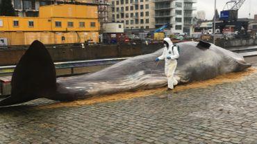 La baleine échouée, juste en face de Tour et Taxi