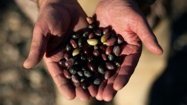 Le département américain du Commerce a annoncé des droits antidumping sur les olives espagnoles