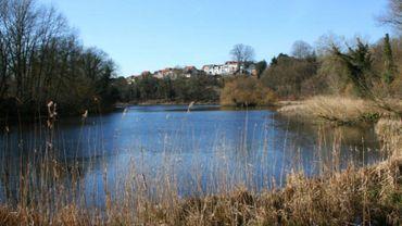 L'alerte a été donnée par un garde forestier qui s'est aperçu que l'un des étangs du Rouge-Cloître contenait des hydrocarbures.