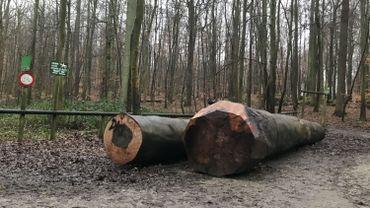 Le pari de la Sonian Wood Coop: exploiter le bois de la Forêt de Soignes à Bruxelles et éviter qu'il ne parte en Asie