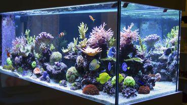 5 Conseils Pour Avoir Un Aquarium Récifal