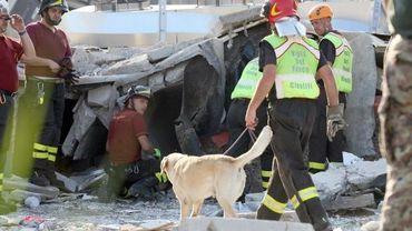 Les sauveteurs fouillent les décombres avec des chiens