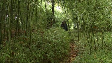 Le jardin a des allures de jungle