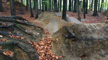 Les racines des hêtres sont abîmées par les passages répétés des adeptes du Mountain Bike, dans ce bosquet de Waterloo.