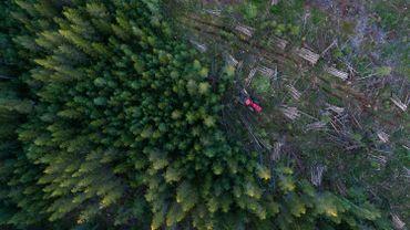"""Déforestation: 43millions d'hectares perdus sur les principaux """"fronts"""" selon le WWF"""