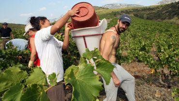 Des Espagnols au travail dans les vignes