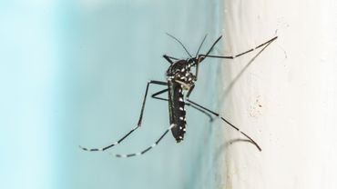 Cet été, faisons attention au moustique tigre
