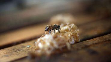 Un tiers des colonies d'abeilles a disparu après l'hiver selon la Fédération Apicole Belge