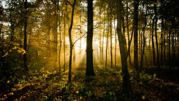 """Des inconnus """"ont coupé une trentaine d'arbres"""" dans la propriété privée du ministre polonais de l'Environnement Jan Szyszko, auteur d'une législation controversée ayant conduit à l'abattage massif des arbres en Pologne, a annoncé mardi la police."""