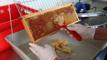 Opération de désoperculation d'un cadre de ruche dans la miellerie mobile de la Province de Liège