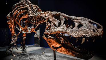 """L'exposition """"Un T. rex à Paris"""" Muséum national d'histoire naturelle de Paris a attiré près de 340.000 visiteurs en quatre mois"""