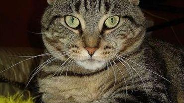 Huy: la campagne de stérilisation des chats errants se poursuit