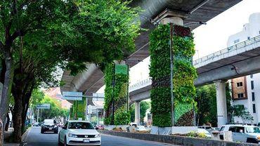 Quand les habitants s'approprient les piliers des autoroutes urbaines afin de rendre leur ville plus verte.