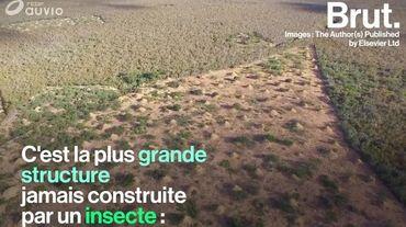 Une termitière aussi grande que la Grande-Bretagne découverte au Brésil